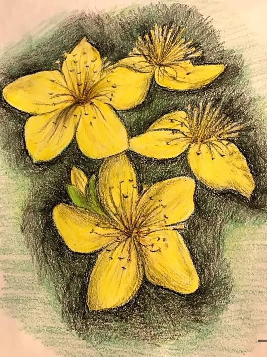 St John's flower